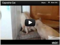 Video: Capoeira Cat